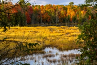 beaver habitat marsh swamp bog fall colors exploring