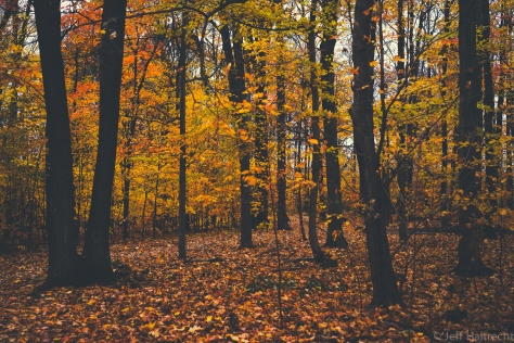 mystical forest with fall colors