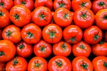 red tomatoes mosaic