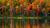 fall colors birch trees echo lake muskoka