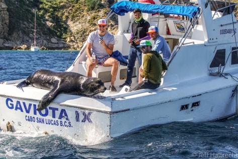 california sea lion free rides fishing boat los cabos mexico