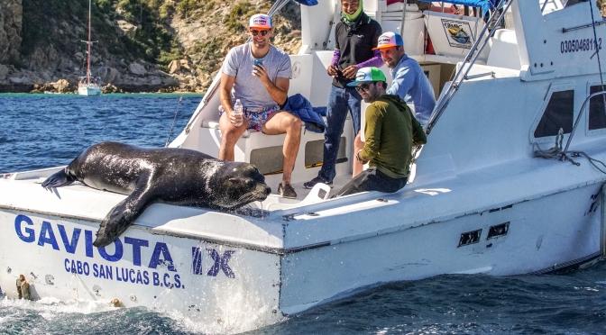 Free ride:  California Sea Lion sunning itself on stern of fishing boat