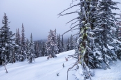 corkscrew glades at big white ski resort