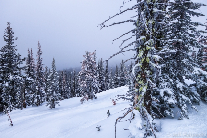 Fresh Powder in the Corkscrew Glades at Big White Ski Resort