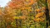 fall colors in the forest lake of bays township muskoka